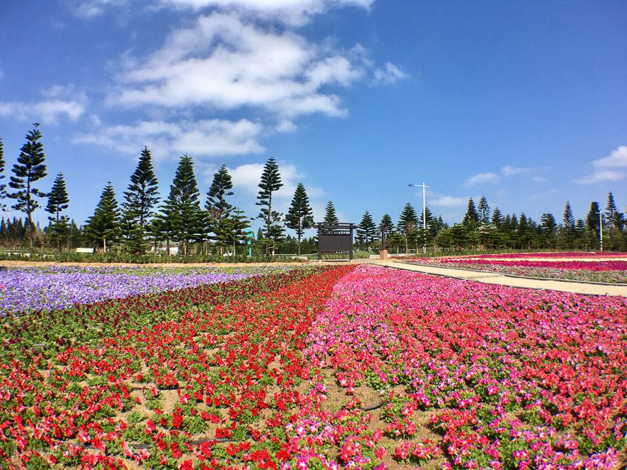 天人湖遊憩區のお花畑