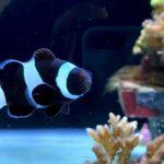 無料で楽しめるミニミニ水族館「水産種苗繁殖場」